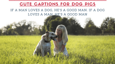 Photo of 150+ Instagram Captions for Dogs Cute Captions for Dog Pics
