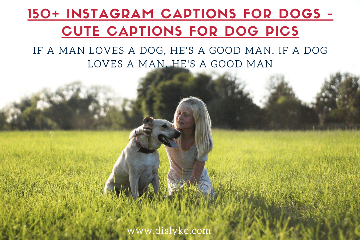 Instagram Captions for Dogs - Cute Captions for Dog Pics