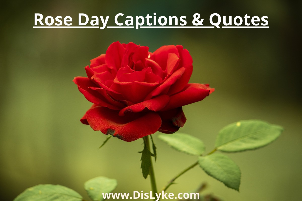 Rose Day Captions captions for Instagram